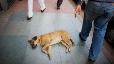 Perro enfermo esperó una semana en la puerta del hospital a su dueño que falleció
