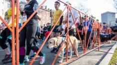 Por primera vez una persona ciega corre la media maratón de Nueva York guiado por perros