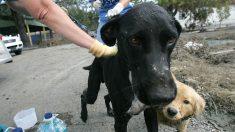 Exitoso empresario deja atrás todo para dedicarse a alimentar perros callejeros en Bolivia