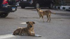 Captan perritos que se ponen a jugar en medio de ceremonia cívica de gobierno local mexicano