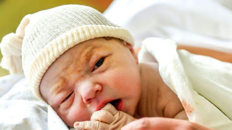Foto de archivo de un recién nacido descansando boca abajo sobre el estómago de su madre después del parto. (Foto de Philippe HUGUEN / AFP/Getty Images)
