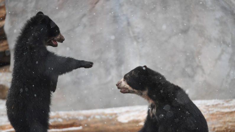 (ARNE DEDERT/AFP/Getty Images)
