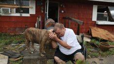 Proyecto de ley en Florida haría ilegal dejar a perros atados o abandonados durante huracanes