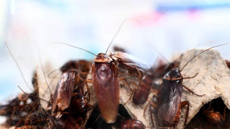 Encuentra más de 40 cucarachas muertas en la cena que pidió a domicilio