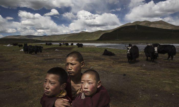 Jóvenes monjes novicios budistas tibetanos en las praderas de su campamento nómada en la meseta tibetana del condado de Madou, provincia de Qinghai, China, el 24 de julio de 2015. (Kevin Frayer/Getty Images)