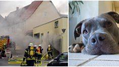 Por amor a su perrita desafió a los bomberos y entró a su casa en llamas, ¡dejó a todos sin aliento!