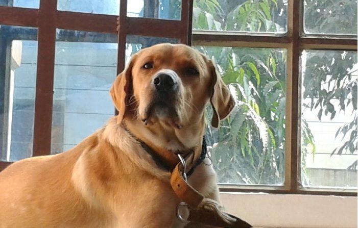 El perro que espera a su amo. Imagen cc0