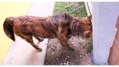 ¡Cuidado! Si tu mascota golpea su cabeza contra la pared es posible que algo grave le esté sucediendo