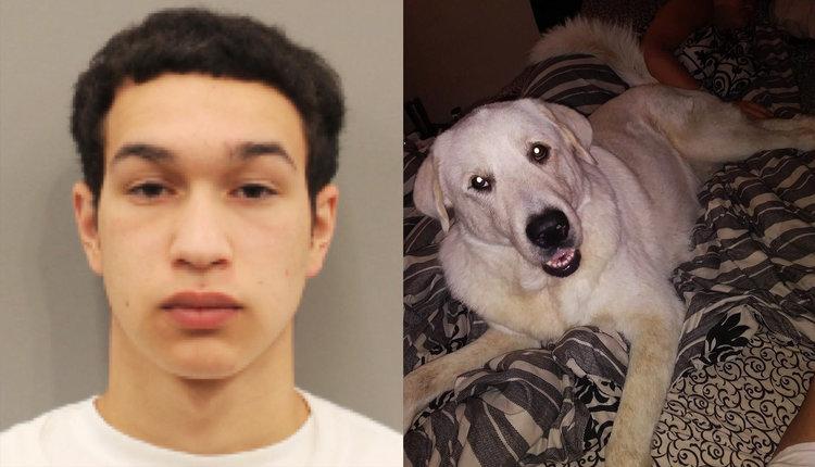 Javian Castenada, a la izquierda, es acusado de haber disparado en una fiesta de cumpleaños de una familia de Houston el 10 de marzo y haber matado a su perro, Zero, a la derecha. (Oficina del Sheriff del Condado de Harris y Laura Martínez)