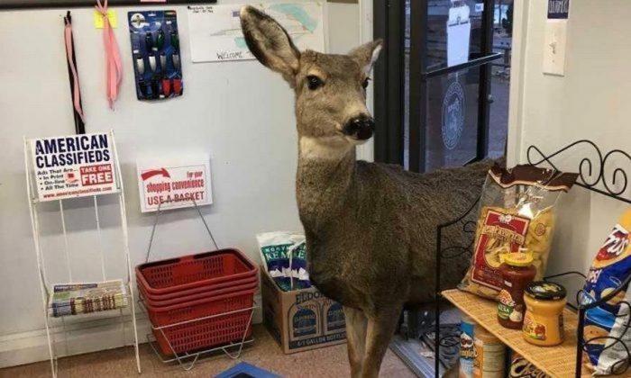 El ciervo de la tienda Horsetooth Inn en Fort Collins, Colorado. (Lori Jones)