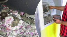 Rata se mete en cajero automático y come 18.000 dólares en billetes hasta morir