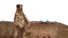 Científicos encuentran fósiles de un oso gigante que vivió hace 700 mil años en Sudamérica