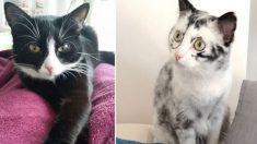 Gato con rara condición cambia el color de su pelaje todos los días