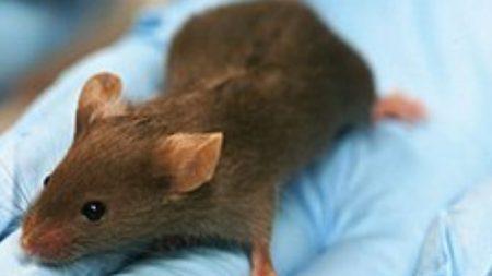 Creyó estar loco porque su cobertizo se ordenaba solo, pero descubrió que el culpable era un ratón