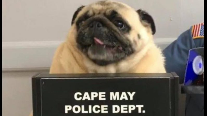(Crédito: Cape May Police Department)