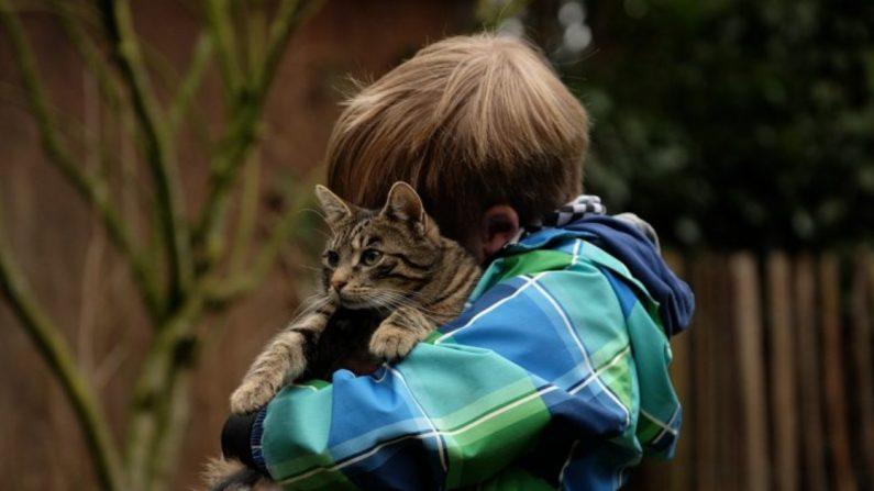Valiente gata salva la vida de un niño autista del feroz ataque de un perro