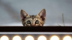 """Autoridades anuncian cierre de """"matadero de gatitos"""" con fines científicos en EE. UU."""