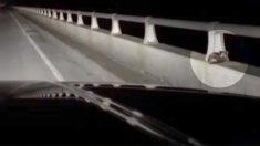 """Pareja ve una """"extraña criatura"""" en la barandilla de un puente y se arriesgan a salvarla"""