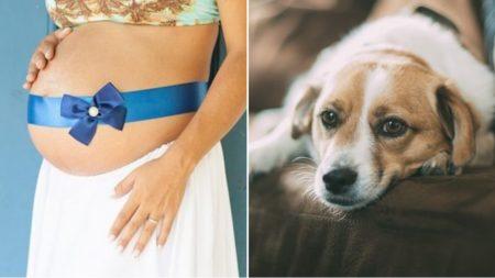 Este perro no paraba de llorar al estar cerca de su dueña embarazada porque sabía que estaba enferma