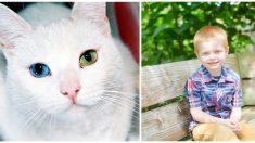 Niño y gato acosados por su rara condición ocular y labio leporino se hacen mejores amigos