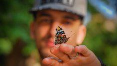 Se animó repoblar una maravillosa especie de mariposa casi extinta ¡y lo hace en su patio trasero!
