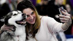 Dejó a su mascota en una perrera solo 3 días y se la devolvieron muerta envuelta en un paquete