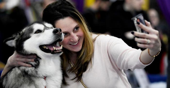 Foto de un perro de la raza husky solo para fines ilustrativos. Sarah Stier/Getty Images.