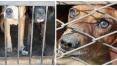 Mueren 270 perros y gatos enjaulados en Gran Bahama en refugio inundado por el huracán Dorian