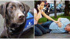 Si se te acerca un perro de servicio sin dueño significa que alguien necesita de tu ayuda
