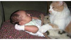 Gatita herida y aterrada no quería ver a los humanos hasta que se acurruca con un bebé recién nacido