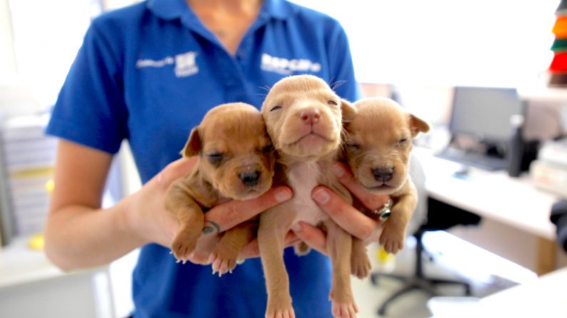 (Foto cortesía de RSPCA South Australia)