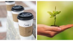 Convierte la basura en árboles: tazas de café con semillas pueden revivir los bosques