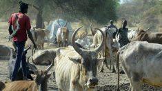 Una mujer es golpeada hasta la muerte por la familia por negarse a casarse por 40 vacas