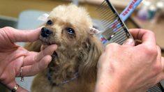 Hombre sordo adoptó un cachorro sordo abandonado y le enseñó el lenguaje de señas