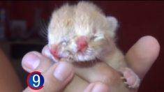 Nace un gatito con dos caras en una provincia argentina