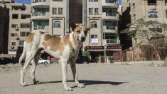 Perrito tiene que vender postres para pagarse sus quimioterapias en México