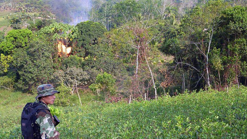 Un soldado peruano está parado en un campo de coca mientras la policía antidrogas prende fuego a un laboratorio de cocaína en la selva tropical del valle del Apurímac, en el sureste de Perú, el 21 de agosto de 2010. Según las autoridades locales, la guerrilla Sendero Luminoso ha comenzado a robar tierras, principalmente en la zona conocida como Vrae (valles de los ríos Ene y Apurímac, de los departamentos de Ayacucho, Cusco, Junín y Huancavelica), para cultivar coca y luego producir cocaína.  (CARLOS MANDUJANO/AFP/Getty Images)