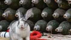 Conejo escarba patio de vivienda y desentierra munición de artillería antiaérea