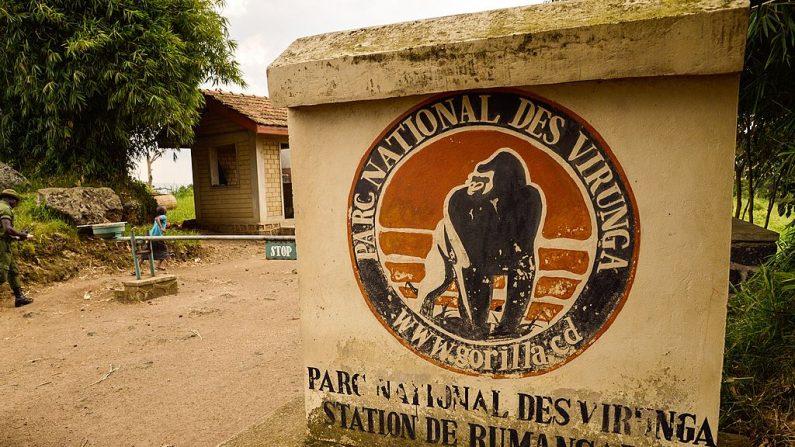 TO GO WITH AFP STORY BY MARC JOURDIER  Un acceso al Parque Nacional de Virunga se ve cerca de Rutshuru el 17 de junio de 2014. La gente que vive en y alrededor de la reserva de vida silvestre más antigua de África, el Parque Nacional de Virunga, amenazada por grupos armados y buscadores de petróleo, está poniendo sus esperanzas en proyectos de desarrollo sostenible para la energía, la agricultura y el turismo. (Junior D. Kannah/AFP/Getty Images)