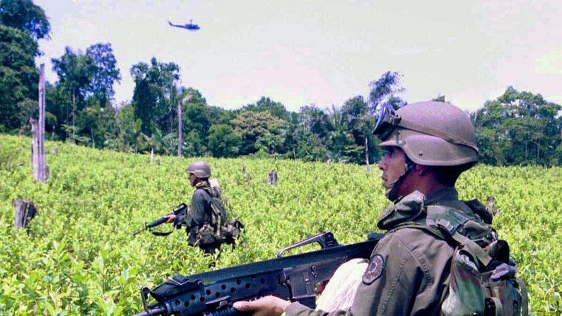 Miembros del batallón antinarcóticos de Colombia realizaron una operación para localizar y destruir una elaborada granja de cocaína en la zona de Catatumbo, en la frontera con Venezuela, el 7 de mayo de 2000. (STR/AFP/Getty Images)