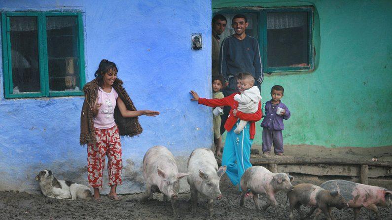 Los habitantes de la aldea Lungani están de pie frente a sus cerdos en su fangoso patio, a 400 km al noreste de Bucarest. Una niña brasileña de 10 años que se contagió de una infección por jugar y caminar descalza en una pocilga. (RADU ANECULAESI/AFP/Getty Images)