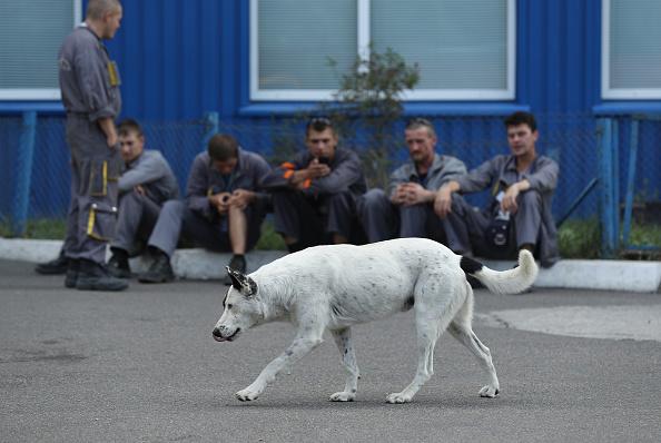 Trabajadores en una pausa vigilan a un perro callejero que pasa frente a un edificio administrativo dentro de la zona de exclusión de la central nuclear de Chernobyl. (Crédito: Sean Gallup/Getty Images)