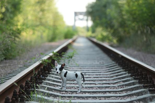 Un cachorro callejero camina a lo largo de las vías del tren abandonadas cerca de la central nuclear de Chernobyl (Crédito: Sean Gallup/Getty Images)