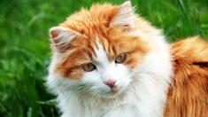 Gatito maltrecho celebra una increíble recuperación a fuerza de muchos cuidados y amor