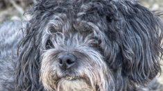 Esta perrita solitaria vuelve a la vida cuando lo rescatan de las calles de Los Ángeles