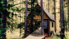Hace increíble cabaña de troncos sin herramientas modernas y no te puedes perder su registro en video