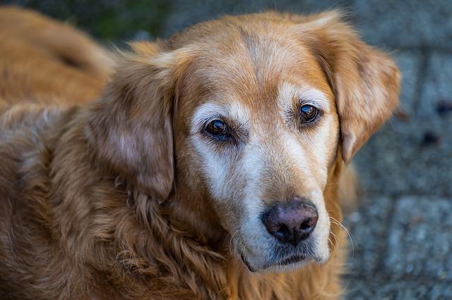 Una perra espera hace 18 meses en una comisaría de Buenos Aires que su dueño salga de la cárcel