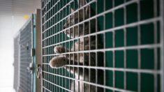 """Gata """"polizón"""" sobrevive 3 semana de viaje sin agua ni comida encerrada en un contenedor"""