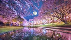 """Luna Rosa"": la particular luna llena de abril que iluminara el cielo en Semana Santa"