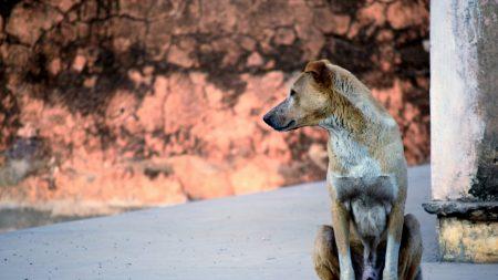 La carita de un perro viejo y enfermo cuando se da cuenta que será rescatado es impagable